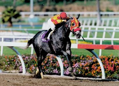 Kuda Balap Paling Menguntungkan dalam Sejarah 2