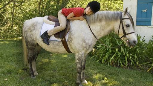 Ras Kuda dan Poni Terbaik untuk Anak-anak