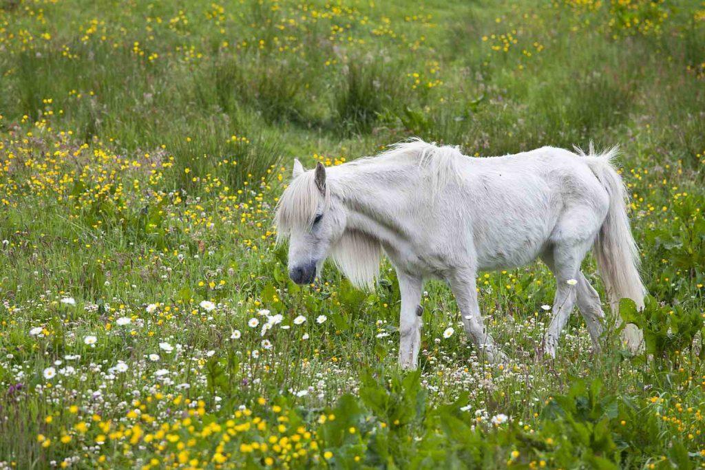 Tanda-tanda Stres pada Kuda