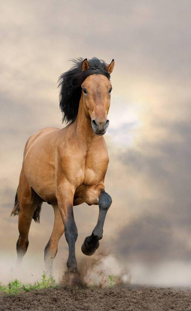Ras Kuda Paling Mahal